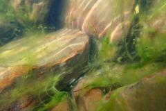 ольховка 03-06-20 водоросли