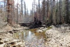 ольховка12июня2019-2