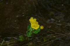 живая_цветок
