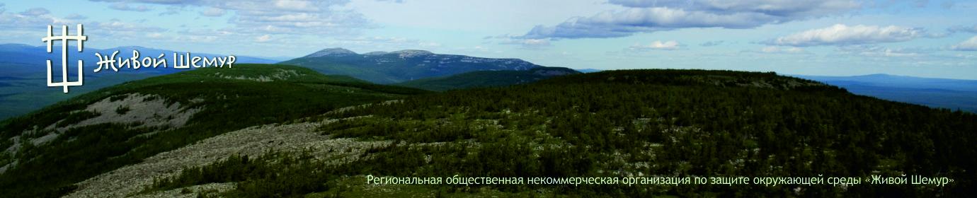 Живой Шемур